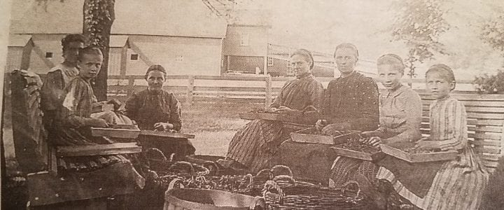 historical photo of ladies and girls preparing vegetables