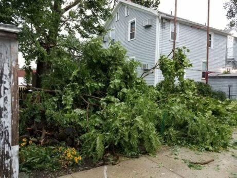 Derecho tree damage