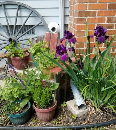 Purple Iris and wagon wheel